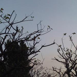 090720_am04-47_plumgrove.jpg